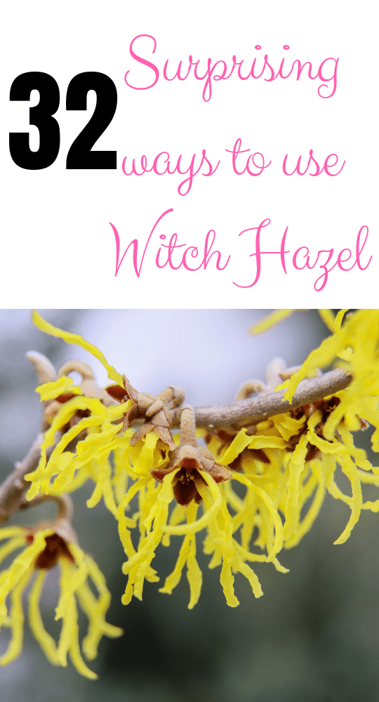 32 Surprising Uses and benefits of Witch Hazel